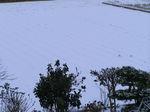 雪ですよ!(2)